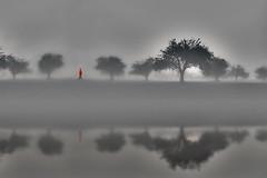 Into the fog (pwendeler) Tags: fog nebel neblig foggy tree person reflection sony sonyalphaa6500 nature naturephotography natur naturfotografie landschaft landscape landscapephotography landschaftsfotografie grey blackandwhite bw schwarzweis