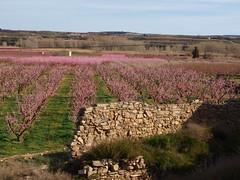 Segrià_Camps d'Aitona_12 (Jordimac) Tags: aitona lagranjadescarp segrià catalunya paisatge patrimonicultural patrimoninatural primavera spring
