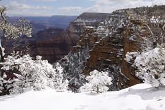 IMG_8647 (patterpix) Tags: grandcanyon arizona snow trees winter canyon storm