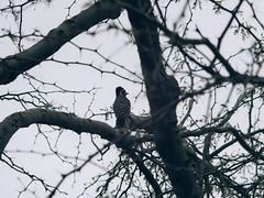 P1022616 (Claussm) Tags: jupiter 21m 200mm soviet russian lens vsco az arizona bird tree telephoto