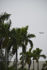 Eagle on Approach (Comiccreator24) Tags: unitedstates america unitedstatesofamerica florida usa floridausa floridaphotographer creativephotography creative photography comiccreator24 youngphotographer teenagephotographer vertical verticalphoto editedphoto manipulatedphoto march 2019 march2019 miamidade county miamidadecounty miami miamiflorida miamifl homesteadflorida homestead homesteadfl trees australianpines 70300mm planespotting planephotography plane avgeek aviation aviationphotography rain rainyday cloudyweather cloudysky overcast overcastskies overcastweather aircraft aircraftspotting f15 f15eagle fighter jet fighterjet palmtrees military militaryplane usairforce unitedstatesairforce nikonography nikon photographer nikonphotographer nikondslr nikond7500 nikond7500photographer dslr digitalphotography digital photo d7500 photographyinflorida