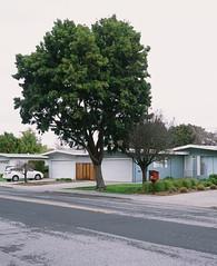 Mountain View, California (bior) Tags: pentax645nii pentax645 provia provia100f fujifilmprovia 6x45cm slidefilm mediumformat 120 mountainview house suburbs residential tree street eichler