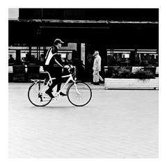 terry keeps his clips on (japanese forms) Tags: ©japaneseforms2019 кошка ネコ ボケ ボケ味 モノクロ 日本フォーム 自転車 黒と白 bw bicicleta bicicletta bicycle bicycles bike blackwhite blackandwhite blancoynegro bokeh candid cat cats fahrräder fiets fietsen gata gato gatto kat kater katje katze kot kotka monochrome oxford pussy radfahren random schwarzweis square squareformat strasenfotografie straatfotografie streetphotography terrykeepshisclipson vivianstanshall vlaanderen zwartwit