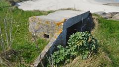DSCN6174 Le Moulard, Montfarville (Manche) (Thomas The Baguette) Tags: barfleur montfarville valdesaire rape colza cotentin manche lamanche lemoulard lasambiere calvaire oratoire crabec moulin