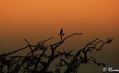P.N. UDAWALAWE (RLuna (Instagram @rluna1982)) Tags: srilanka ceilan ceylon asia indico elefante colombo sigiriya hablaran anuradhapura tea té buda budismo hinduismo kassapa viaje travel vacaciones playa beach coconut pagoda dagoba tamil dambulla kandy pinnawela nuwaraeliya hortonsplains udawalawe unesco arte patrimonio bengala selan cingales atardecer amanecer sunset sunrise anochecer photo canon landscape rluna rluna1982 serene mar sea colorful nature exposure world yala tissamahara instagram instagramapp me camera lignt spotlight igers igersspain igersmadrid eos multicolor igerspain