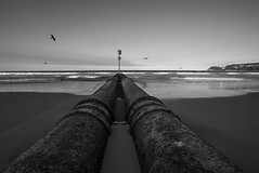 DSC01060 (Damir Govorcin Photography) Tags: blackwhite manly beach sydney monochrome leading lines birds sky water composition zeiss 1635mm wide angle sony a7rii
