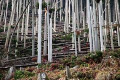 SDQ_1122 (koyaman3422) Tags: 京都 kyoto sigma sdquattro 1770mm 貴船神社