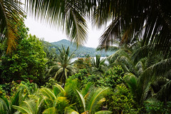 Jungle view, Ko Phangan (Thailand) (Steffen Kamprath) Tags: asia asie asien bay carlzeisssonnarte1824za coast countryside day emount island jungle kophangan kohphangan landscape nature nopeople ocean outside pacific pacifique pazifik primelens rural sel24f18z scenery sea seascape shore sonya6000 sunny tailandia thailand thaïlande travel travelphotography tree vacation water zeiss natural ประเทศไทย เกาะพะงัน