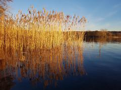 Auf dem Kellersee_20190215 (Gabi Liermann) Tags: ostholstein schleswigholstien eutin malente holsteinischeschweiz