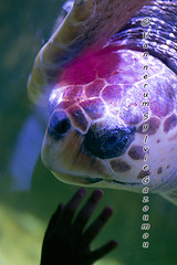 Pairi Daiza (gazoumou) Tags: vannerumsylvie gazoumou pairidaiza brugelette belgique belgium animal hainaut parc park wallonie zoo nature aquarium eau underwater