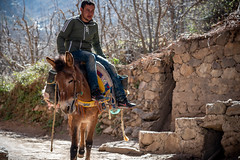 Berber on a Mule, Atlas Mountains, Morocco (KSAG Photography) Tags: mule human man person berber morocco northafrica africa street village nikon march 2019 spring road animal hdr atlasmountains mountains