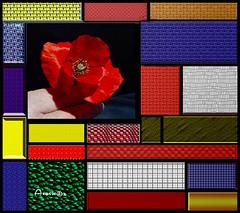 Composición cubista, texturas (Anavicor) Tags: composicióncubista cubismo poppy amapola color abstracto montaje procesado photoshop nikon textura cuadro cuadrado square carré anavillarcorrero anavicor couleur