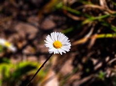 _3240151_Firma (artsoulsstudio) Tags: flor natura darnius olympus em10 naturaleza macro