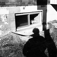 Être au pays des rêves... (woltarise) Tags: rêves autoportrait ombre streetwise iphone7 montréal rosemont fenêtre activité soleil sieste dormir chat