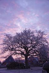 _DSC6183 (Ronae2987) Tags: meddewade baum tree sonnenaufgang sunrise