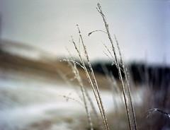 (toulouse goose) Tags: film kodak portra 400 mamiya 645 e 120 sekor80mm28 mediumformat c41 homedeveloped epson v500 winter ice storm grass