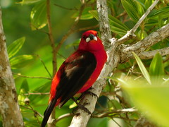 Red 2 (moarastaeblein) Tags: bertioga sp brazil