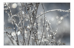 icicles (janet.capling) Tags: icicles jewelry jewel ice branches winter bokeh carp macro frozen
