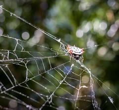 (airmanflames) Tags: webs outside eyes legs nature bug spiders