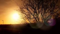 Spring Sunrise (Michelle O'Connell Photography) Tags: spring sunrise glasgow morning tree silhouettephotography silhouette sunbeam sunflare drumchapel heathcotavenue springmorning glasgowphotographer drumchapellifesofar michelleoconnellphotography