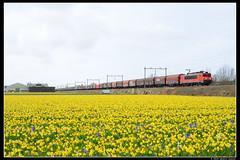 DBC-1604+61265_Nwh_24032019 (Dennis Koster) Tags: dbc dbcargo 1604 staaltrein trein goederentrein 61265kfhnbvhc shimmns noordwijkerhout bollen bollenveld narcissen hyacinten