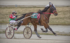 Harness Racing (sjoblues) Tags: horse racing harnessracing track sulky animal motion panning