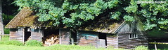 Decaying shed covered by an oak tree. (elbigote1946) Tags: decay old shed barn firewood storage oaktree holzschuppen verfall