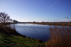 Buckenham Marshes RSPB (Gemma Hampton) Tags: river marshes birds ducks reeds reedbed norfolk uk rspb buckenham