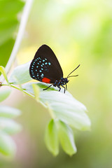Imperfect beauty (Angelo Aversa) Tags: macro butterfly nikon closeup bokeh green colors mariposa life