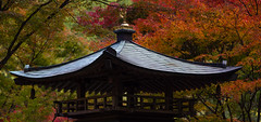 Temple (stephanexposeinjapan) Tags: japon asia asie stephanexpose japan temple nenbutsuji kyoto arashiyama nature automne canon 600d 100mm