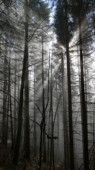 Schnappenberg Nebel Sonne (Aah-Yeah) Tags: schnappenberg sonne sonnenstrahlen sonnenlicht sonnenschein sunlight sunrise nebel fog mist achental chiemgau bayern