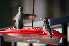 OC_Birds_12-24-18-3