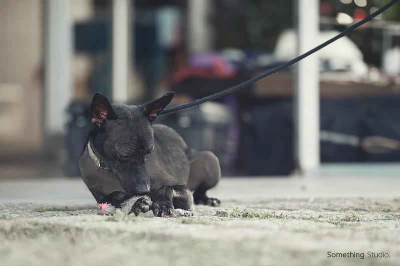 寵物攝影/待領養-寶石