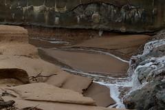 IMG_0509 (monika.carrie) Tags: monikacarrie wildlife scotland aberdeen waves