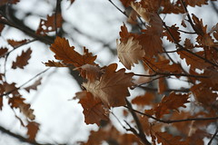 still there (ericgrhs) Tags: leaves branches tree foliage nature natur baum zweige laub blätter winter dezember december dof
