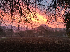 Some sunrises in autumn with Babadag in the distance (VillaRhapsody) Tags: sunrise autumn dawn kayaköy fethiye rural field babadag sun light pink branch tree