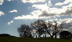 winter backlight II (phacelias) Tags: wolken clouds nuvole backlight tegenlicht controluce trees bomen alberi landscape landschap paesaggio silhouette toscane umbria italy