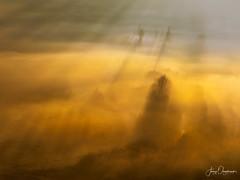 Obidos fog (Jerzy Orzechowski) Tags: shadows sunise silhuette obidos trees vineyards fog moody yellow orange portugal
