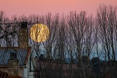 luna de mañana (miguelangelortega) Tags: luna moon mañana madrugada árboles invierno superluna chimenea casa alameda arboleda casadecampo escarcha frío horadorada cielo sky goldenhour ramas ramassecas monte bosque ciudad
