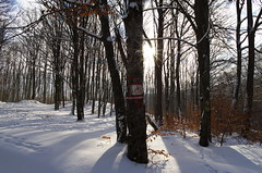 Signs (Baubec Izzet) Tags: baubecizzet pentax landscape light sun forest trees snow winter nature flickrunitedaward