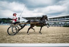 Hackney Pony (Jen MacNeill) Tags: hackney pony ponies horse sulky cart show devon pa bay equestrian speed fast motion blur roadster