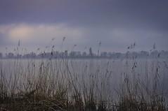 Rives de Garonne (@phr_photo) Tags: landscape paysage france gironde sudouest bordeaux fleuve hiver matn lumière autoremovedfrom10to25faves