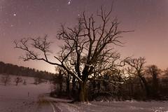 Wildenstein oak under a starry sky (eichlera) Tags: tree oak snow winter night sky stars cold