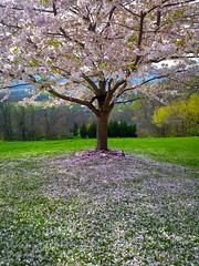 Blooming blossom flora - Credit to https://homegets.com/ (davidstewartgets) Tags: blooming blossom flora flowers garden grass landscape nature park scenery scenic season springtime tree wood