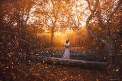 Fall Whisper ({jessica drossin}) Tags: jessicadrossin woman fall leaves autumn leaf orange gold golden light dress purple trees brick wall log losangeles pretty wwwjessicadrossincom