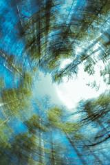 Ponderosa Pine Forest in a Spin (Ed Cheremet) Tags: arizona canon60d edcheremet hdr mundsparkarizona twist abstract conifer effetsblur fineartamerica flagstaff forest pineforest pinetree ponderosapine ponderosapineforest spin tree trees