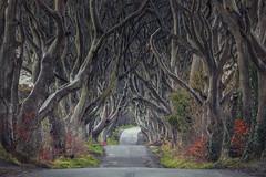 The Dark Hedges (Andrew G Robertson) Tags: dark hedges antrim tree northern ireland game thrones ballymoney