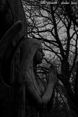 Pray (darkangel1910) Tags: duisburg nrw deutschland sternbuschweg friedhof fotografie friedhöfe forthelovetothedetail schwarzundweis blackandwhite gothic graveyard grabstätte gedenksteine pray flügel angel engel erinnerung grabmal grabmäler germany gravestones grab gottesacker darkness düster dark dunkel death winter wings cemeteries cemetery cimetière cimitero stille momente kunst kunstwerk bildhauerkunst begraafplaats silent moments arte art ausdemherzenfotografiert love liebe leidenschaft passion photography liebezurfotografie