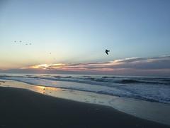 IMG_5118 (francesxcabrini) Tags: chincoteague assateague island ocean sea sunset beach