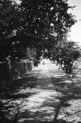 A footpath (Matthew Paul Argall) Tags: hanimex35es fixedfocus focusfree 35mmfilm kentmerepan100 100isofilm blackandwhite blackandwhitefilm footpath